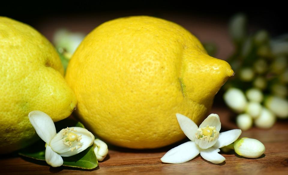 """Résultat de recherche d'images pour """"citorn"""""""