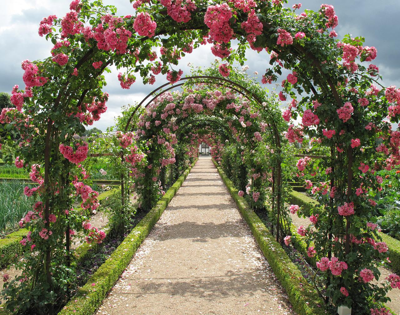 Луковицы садовых цветов фото и названия этом вопросе
