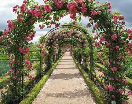 Roses, Espalie, Have, Fredensborg