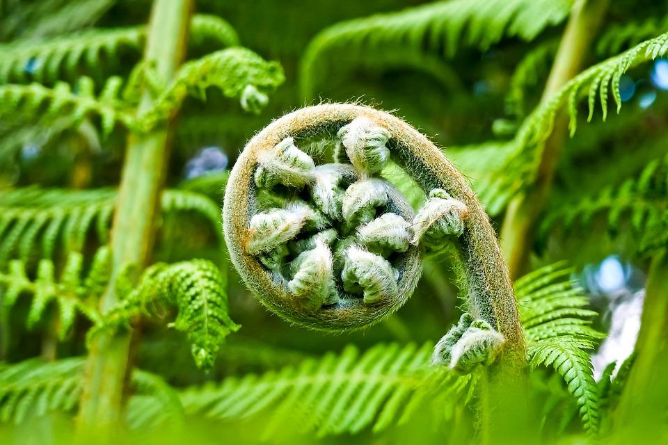 Palmes, Fougère, Flora, Jardin Botanique, Jaune Vert