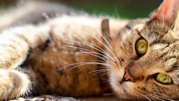 Cat, Animal, Kitten, Pet, Mieze