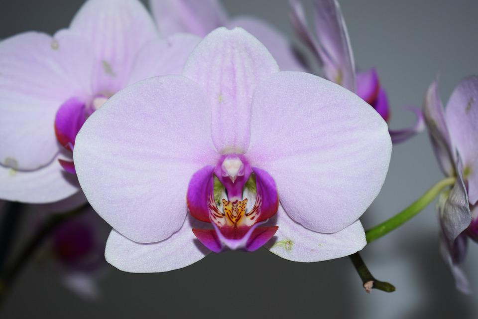 free photo flower, orchid, flowers  free image on pixabay, Beautiful flower