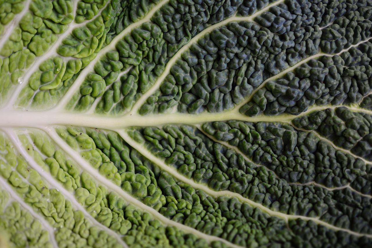 Cabbage Leaf Savoy Free Photo On Pixabay