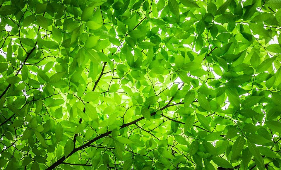 Koľko stromov je potrebných na výrobu kyslíka pre jednu osobu?