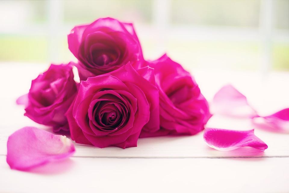 Rosas Pétalos Flores De La Foto Gratis En Pixabay