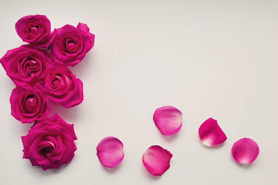 Roses, Pétales, Floraux, Romantique, L'Amour, Romance