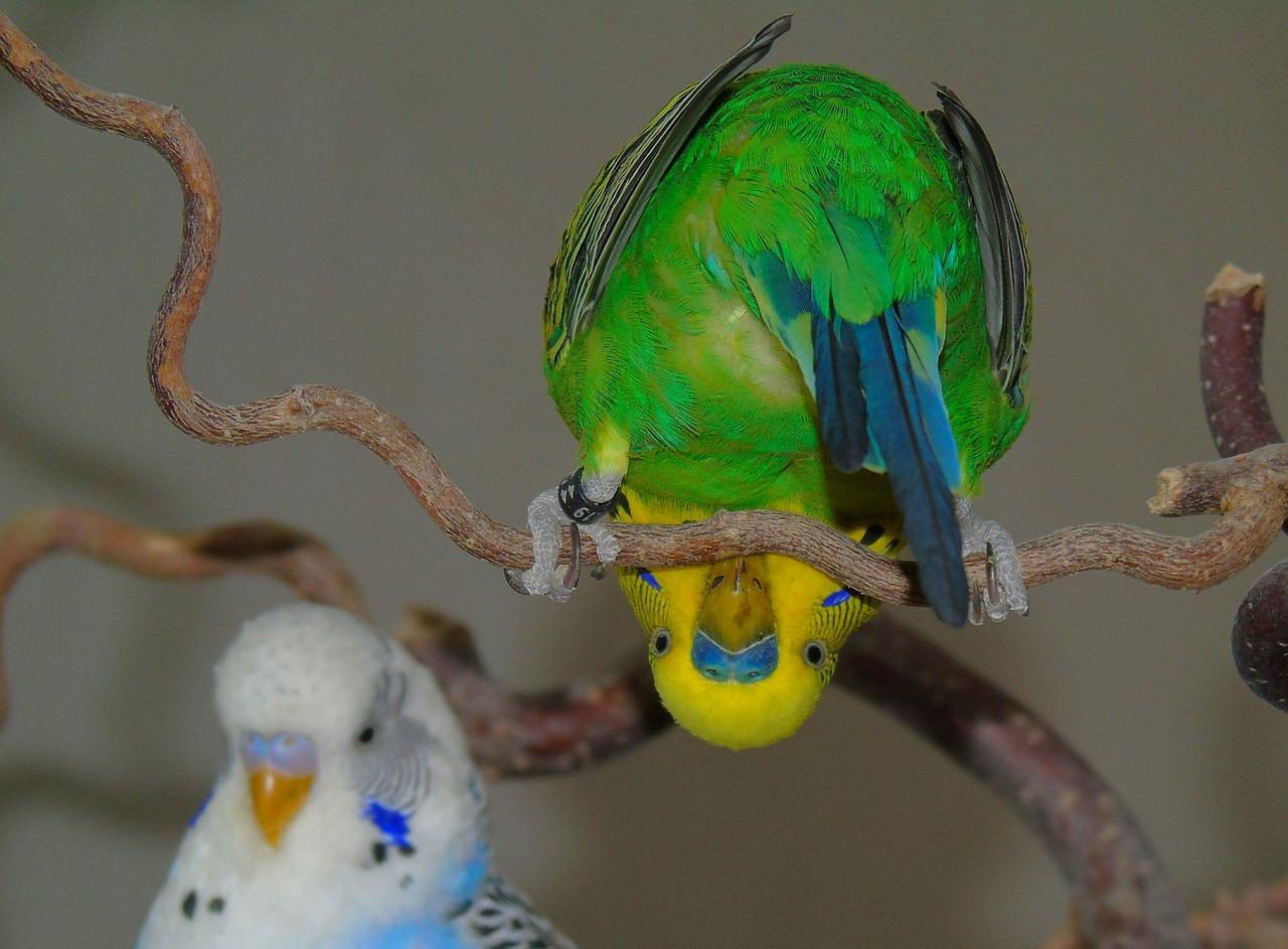 порно русс у попугая фото