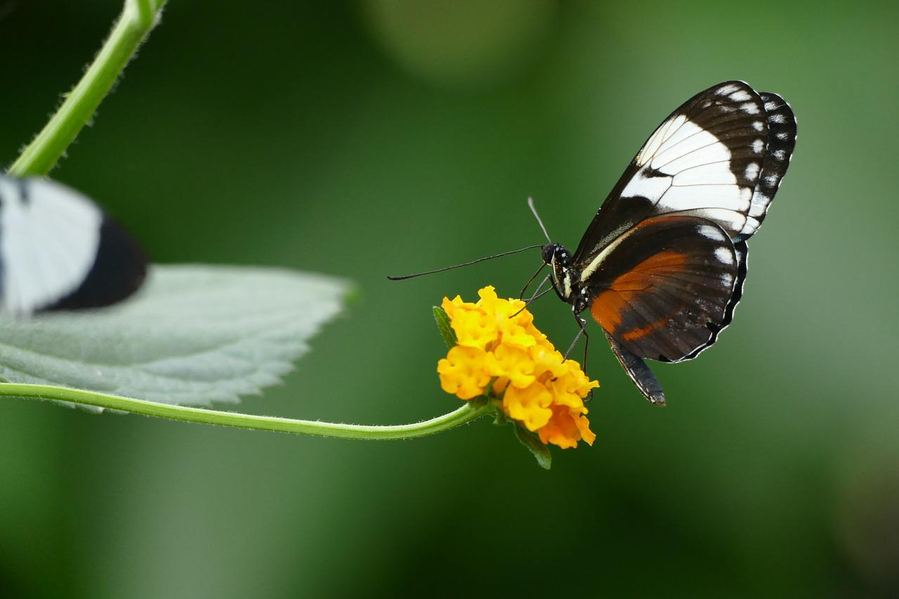 Картинки бабочки любовь