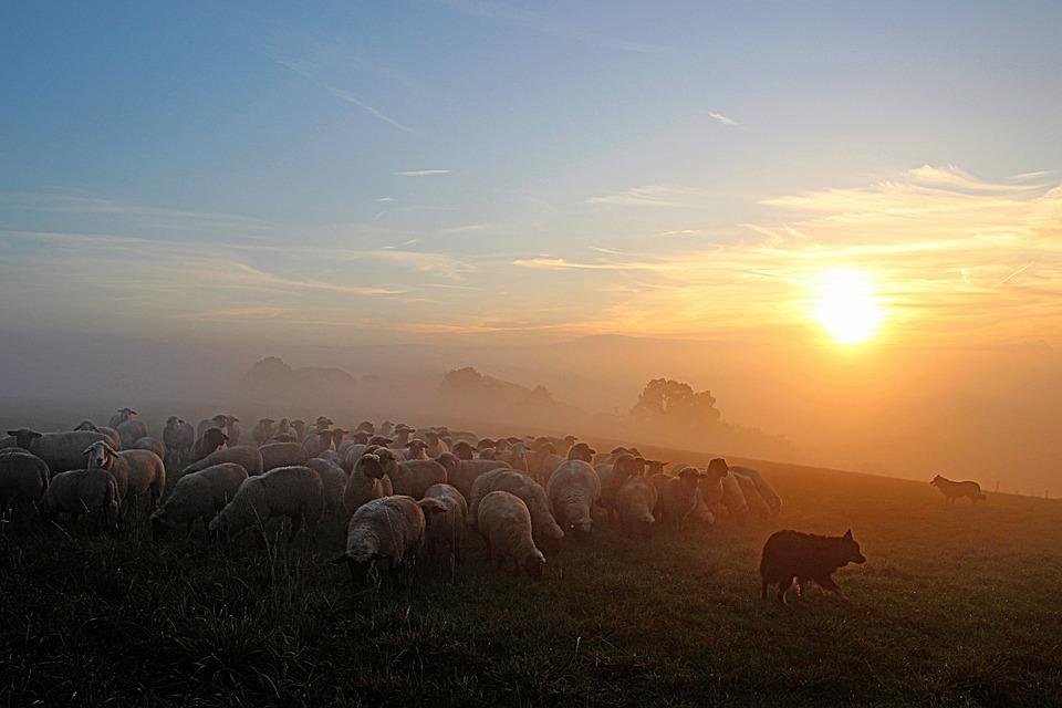 羊の群れ, 羊飼いロマン, Abendstimmung, 夜の光, 夕暮れ, 残光, サンセット, 夜, 自然