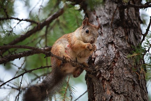 Squirrel, Nature, Animals, Park, Tree