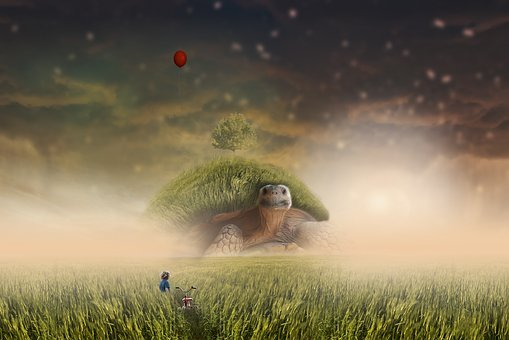 Landscape, Boy, Grass, Turtle
