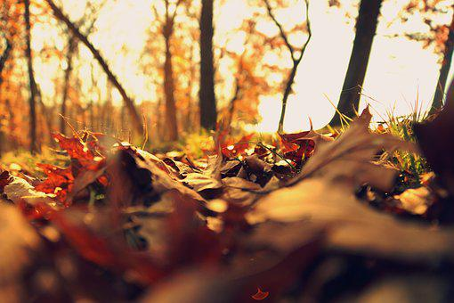 Fall, Leaves, Cold, Autumn