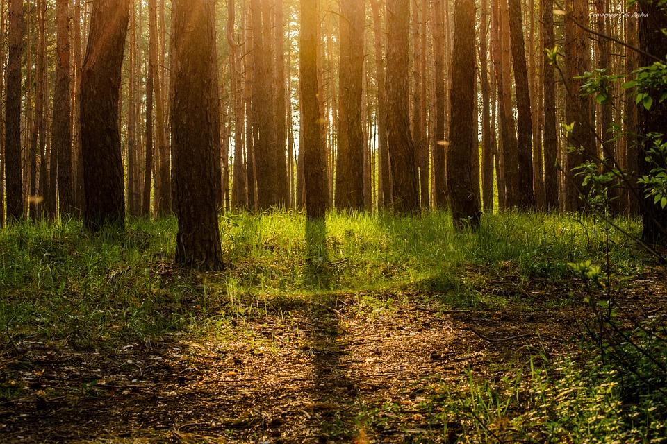 Free photo Forest Ecology Tree Magic Story Free Image on