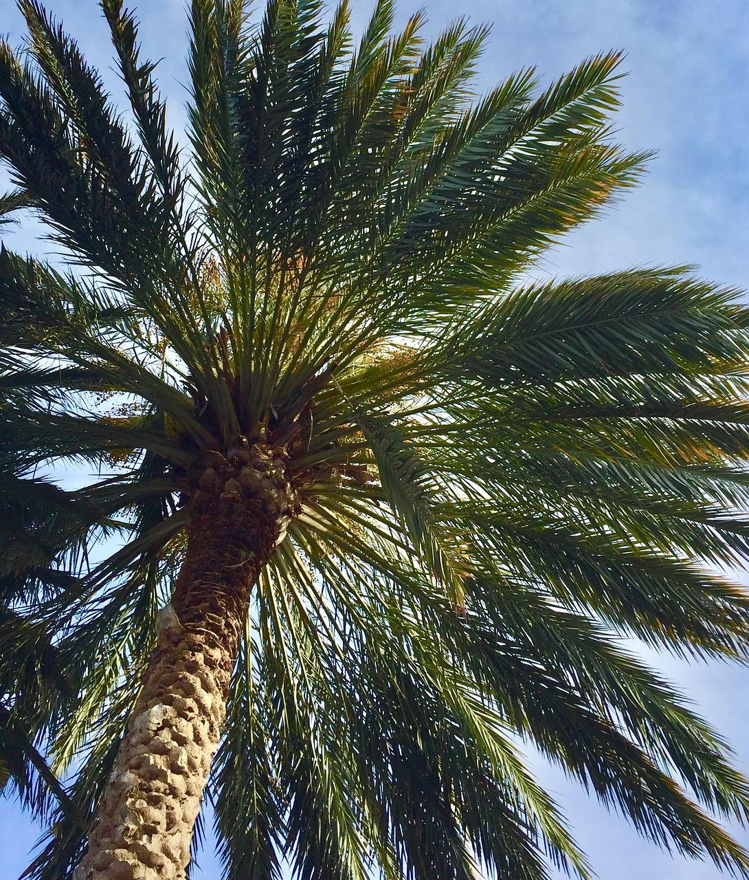Картинки всех видов пальм