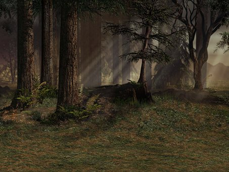 Background Forest Trees Nature Textur