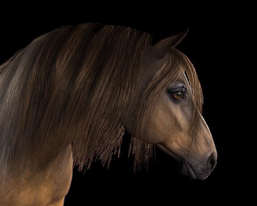 Cheval t te de des image gratuite sur pixabay - Image tete de cheval ...