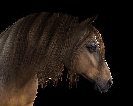 Horse Head Horse Head Animal Mane Ani