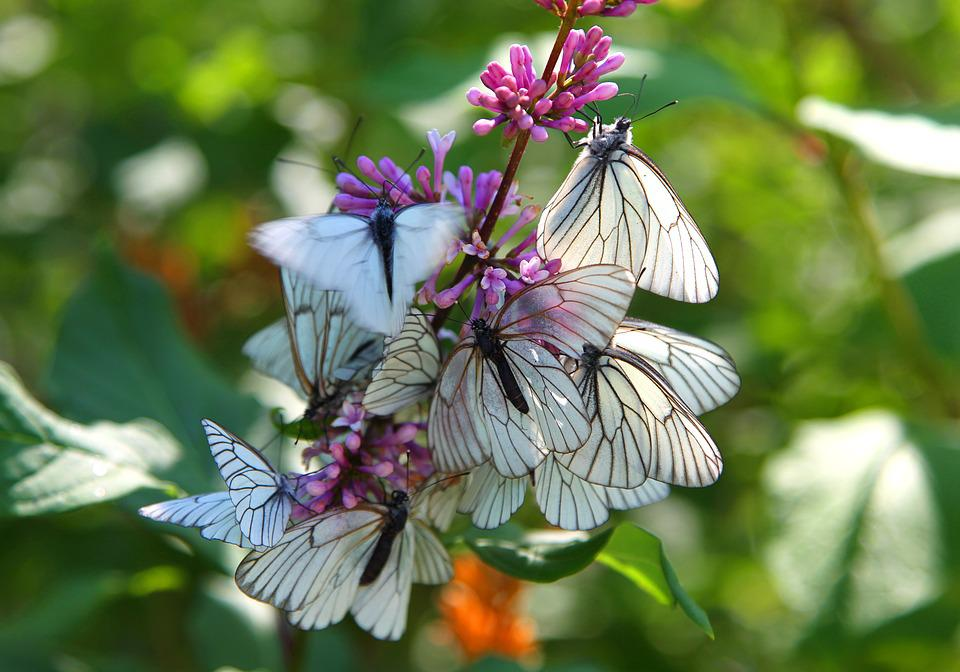 L'Istinto, Farfalla, Primavera