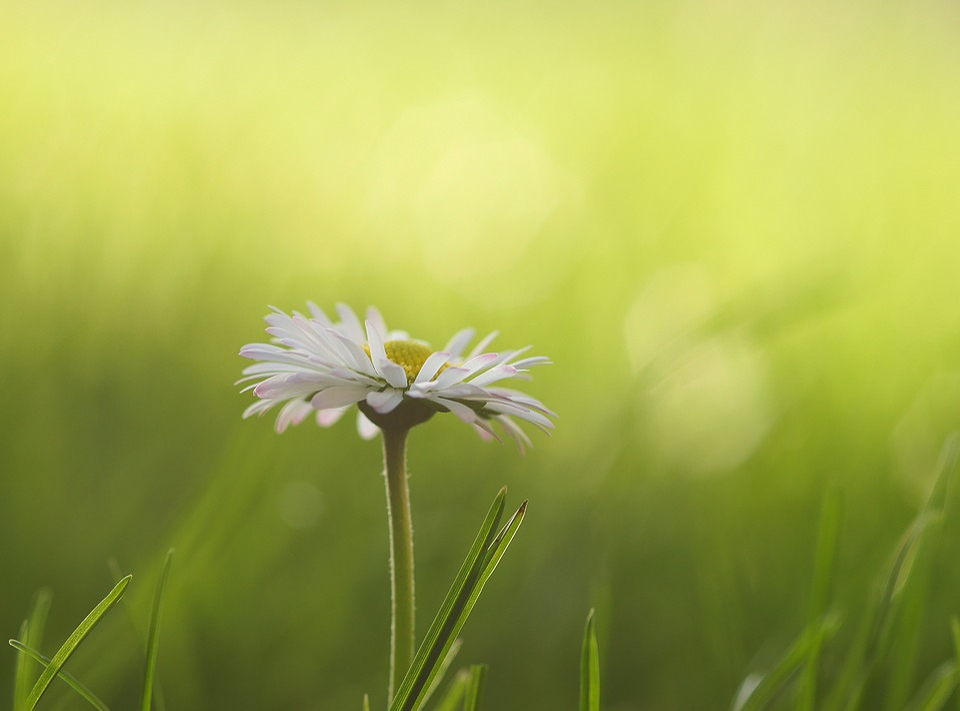 Daisy Meadow Flowers 183 Free Photo On Pixabay