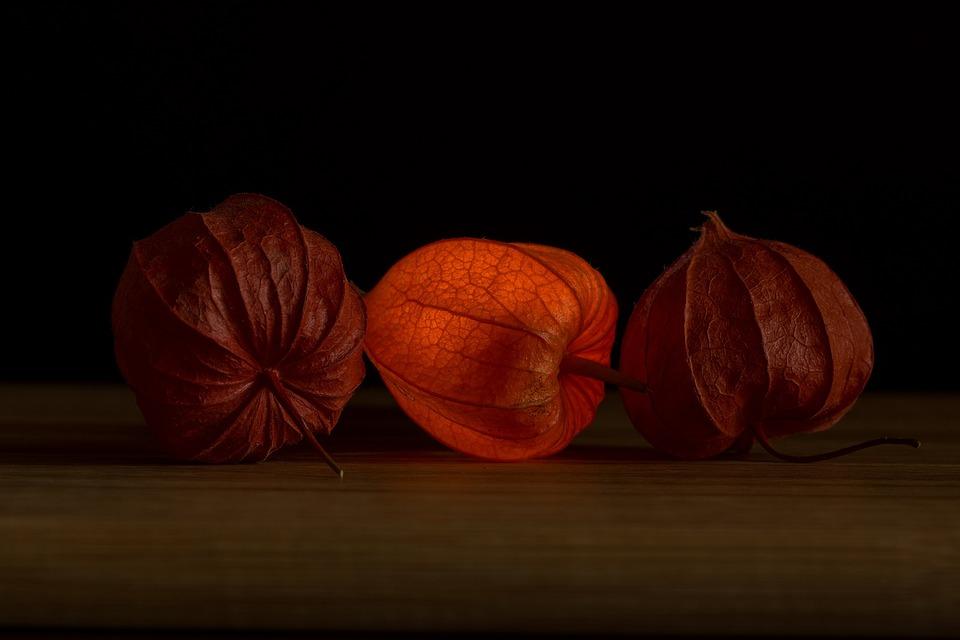 Lampionblume Physalis Naranja · Foto gratis en Pixabay