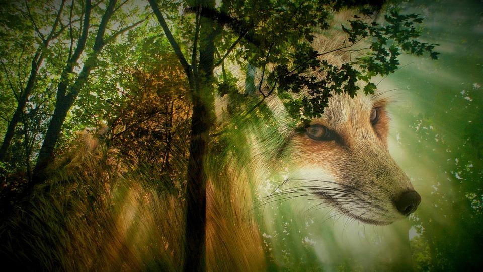 Fuchs, Animal, Forest, Wild Animal, Animal Portrait