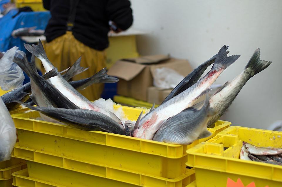 Fish, Bar, Auction, Fresh Fish, Fishery, Wolf