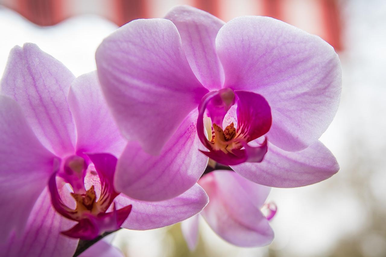 да, все о цветах орхидеи фотографии посещения забудьте оставить