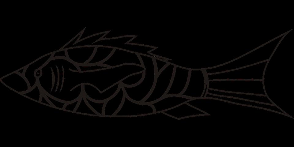 Ryba, Symbol, Wektor, Bez Tła, Przezroczyste Tło