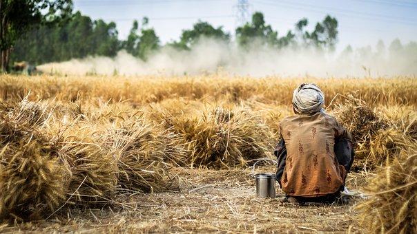 Short Zen Stories: An Old Farmer