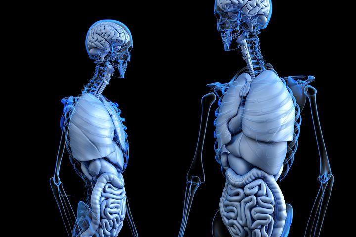 Anatomical, Anatomy, Body, Gut, Health