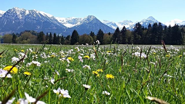 Alpine Mountain Meadow Mountains · Free Photo On Pixabay