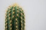 cactus, plant, thorns