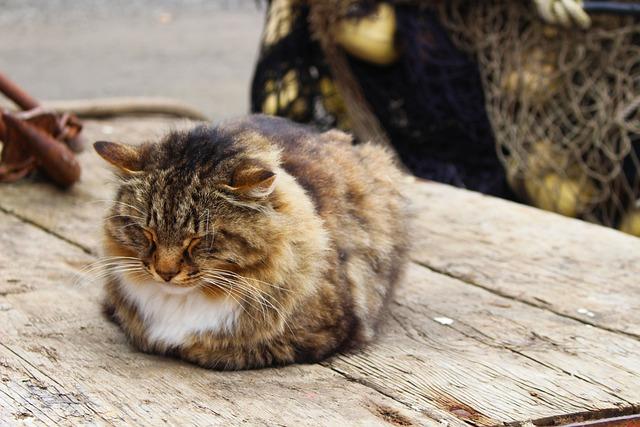 Cat Sleeping Outdoor 183 Free Photo On Pixabay