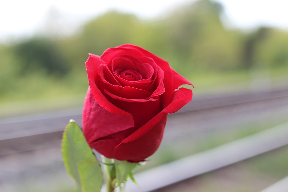 Red Rose, Railway, Stop Suicide, Prevent Suicide