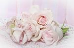 roses, romantic, background