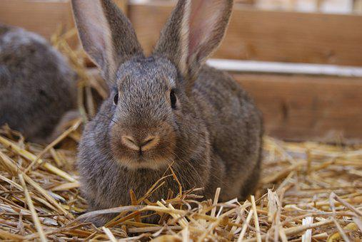 Rabbit, Bunny, Easter, Cute, Holiday