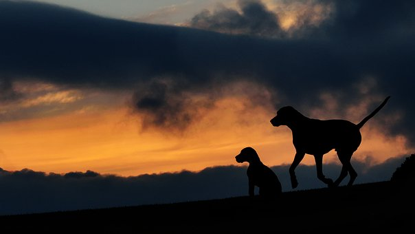 Silhouette, Two Dogs, Sunset