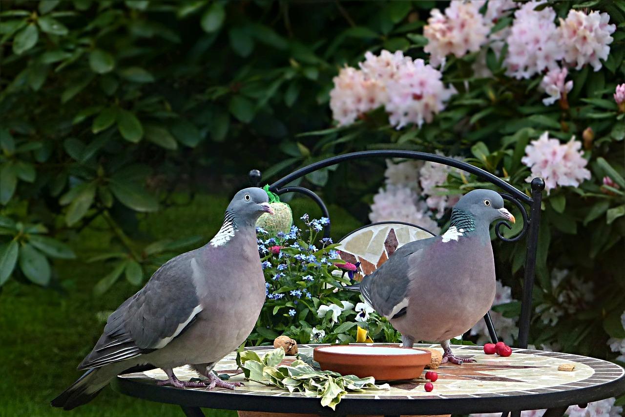 того, все о голубях фото картинки даже размеру