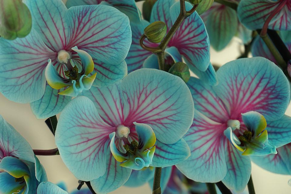 free photo orchids, flowers, blossom, bloom  free image on, Natural flower