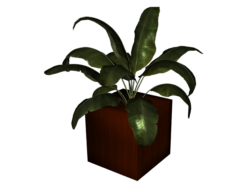 Maceta Planta Aislado De Plantas · Imagen gratis en Pixabay