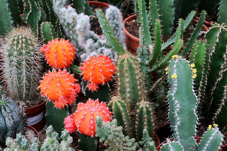 меня фото кактусов начинающему вызвала самая