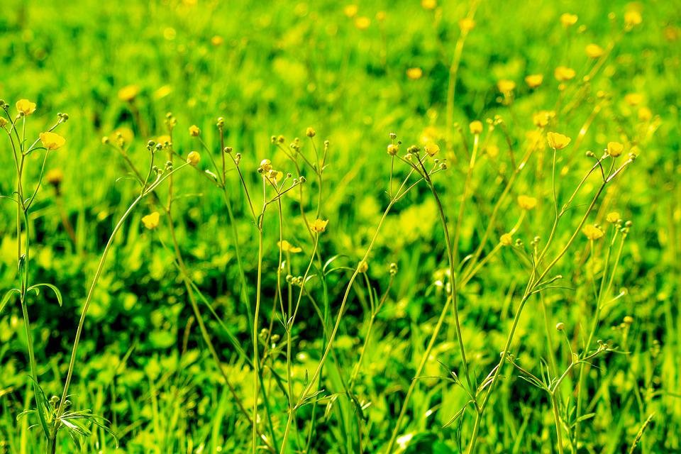Meadow yellow flowers green free photo on pixabay meadow yellow flowers green yellow blossom bloom mightylinksfo