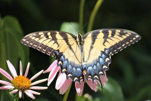 papillon papillon de nuit insectes - Image De Papillon