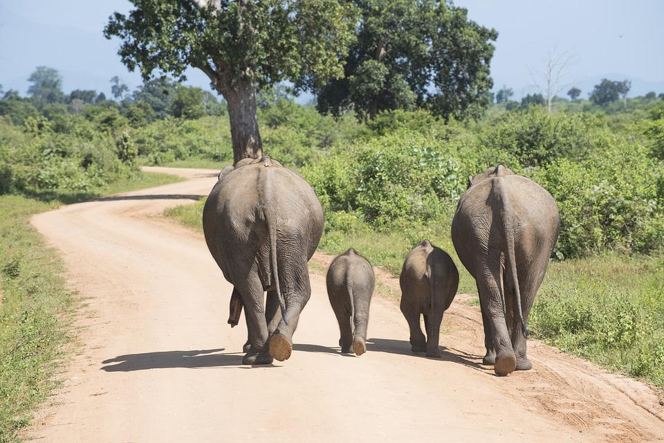 Vacances, Éléphant, Famille, Zoo, Bébé Éléphant, Trompe