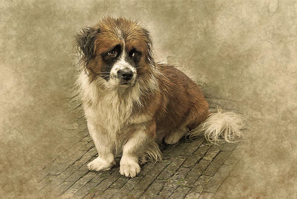 Animal Dog Unhappy 183 Free Image On Pixabay