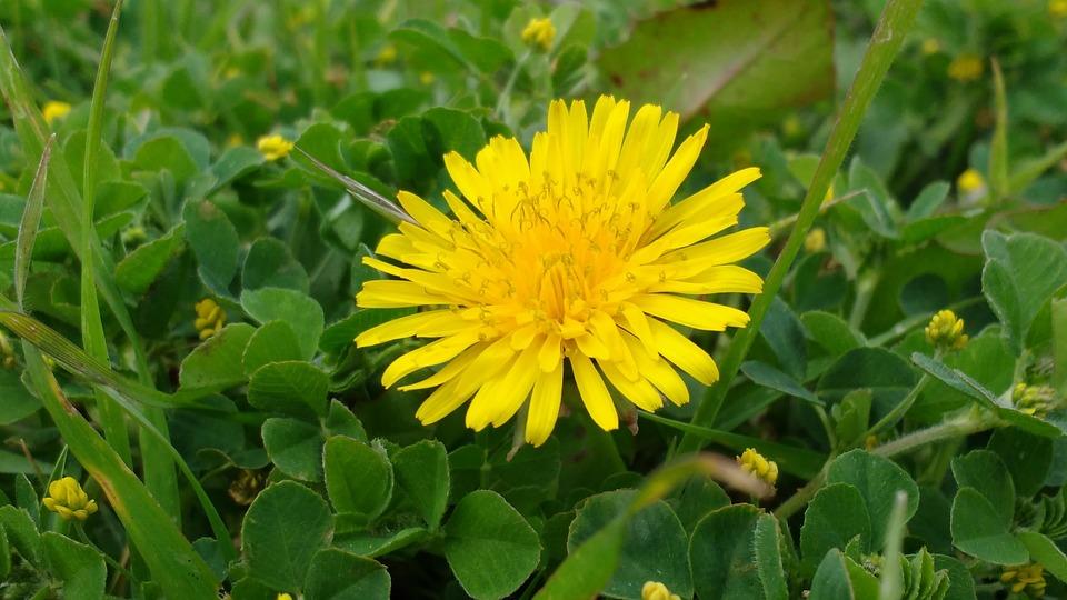 Flower yellow grass free photo on pixabay flower yellow grass petals nature flowers light mightylinksfo