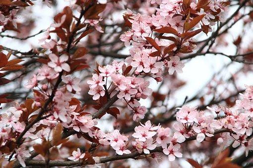 Primavera, Fiori, Rosa, Natura, Impianto