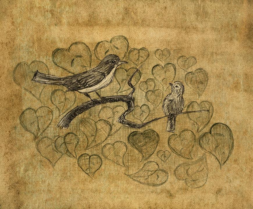 Zadarmo. Papagáj, Vtáky, Domáce Zviera, Roztomilý Labrador Retriever, Čokoláda, Pes, Hnedá.