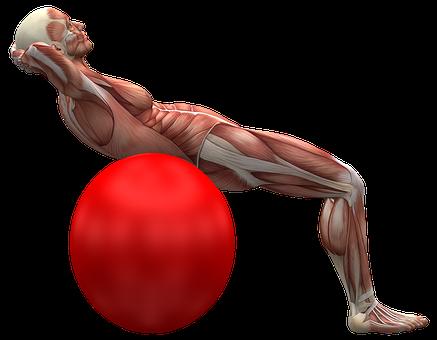 EMSCULPT muscles