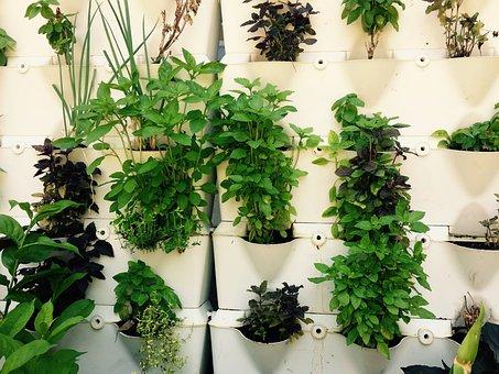 Herbs, Herbal, Growing, Green, Plants